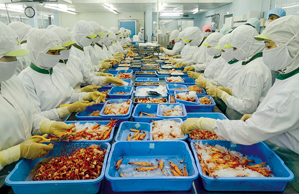 Workers process shrimp at Trà Nóc 2 Industrial Park in the city of Cần Thơ. — Photo baocantho.com.vn